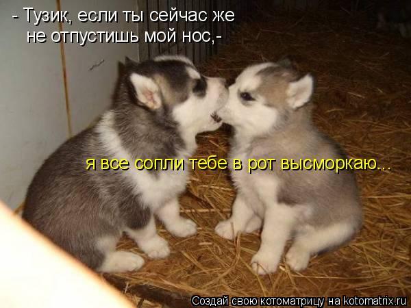 Котоматрица: - Тузик, если ты сейчас же  не отпустишь мой нос,- я все сопли тебе в рот высморкаю...