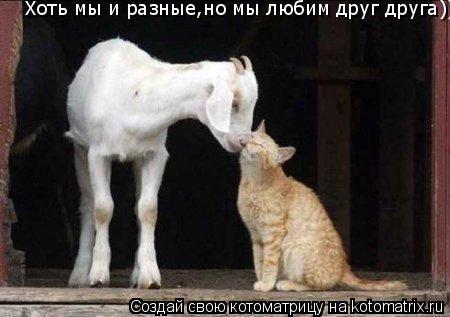Котоматрица: Хоть мы и разные,но мы любим друг друга))