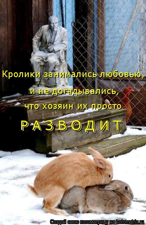 Котоматрица: Кролики занимались любовью,  и не догадывались, что хозяин их просто Р А З В О Д И Т  Р А З В О Д И Т