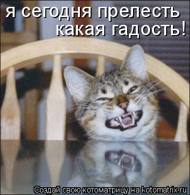 Котоматрица: я сегодня прелесть какая гадость!