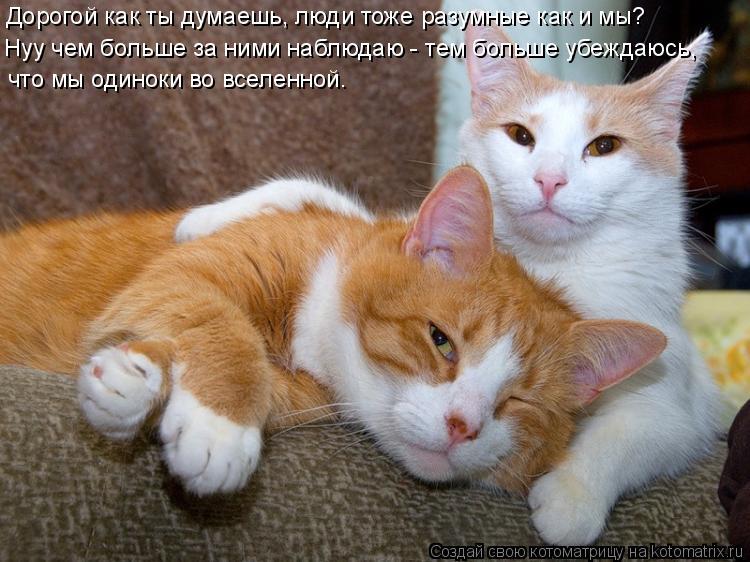 Котоматрица: Дорогой как ты думаешь, люди тоже разумные как и мы? Нуу чем больше за ними наблюдаю - тем больше убеждаюсь,  что мы одиноки во вселенной.