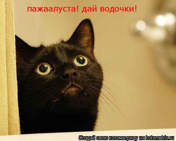 Котоматрица: пажаалуста! дай водочки!
