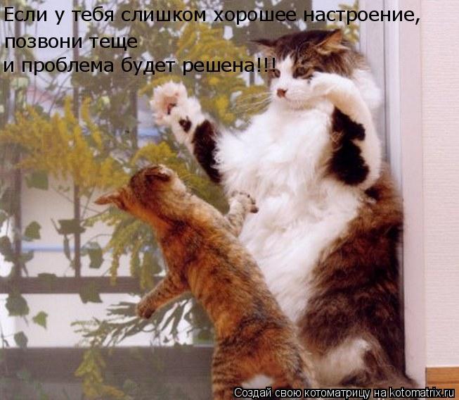 Котоматрица: Если у тебя слишком хорошее настроение, позвони теще и проблема будет решена!!!