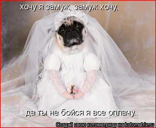 Котоматрица: хочу я замуж, замуж хочу,  да ты не бойся я все оплачу….
