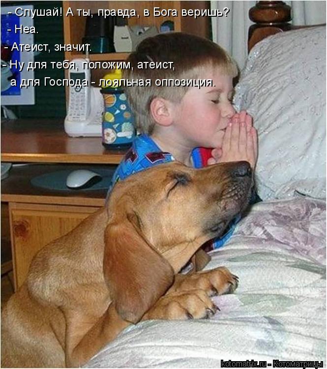Котоматрица: - Слушай! А ты, правда, в Бога веришь?  - Неа. - Атеист, значит. - Ну для тебя, положим, атеист, а для Господа - лояльная оппозиция.
