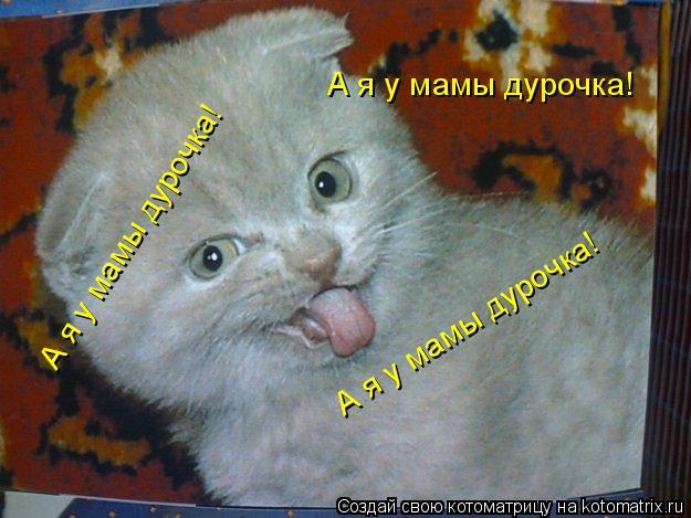 Котоматрица: А я у мамы дурочка! А я у мамы дурочка! А я у мамы дурочка!