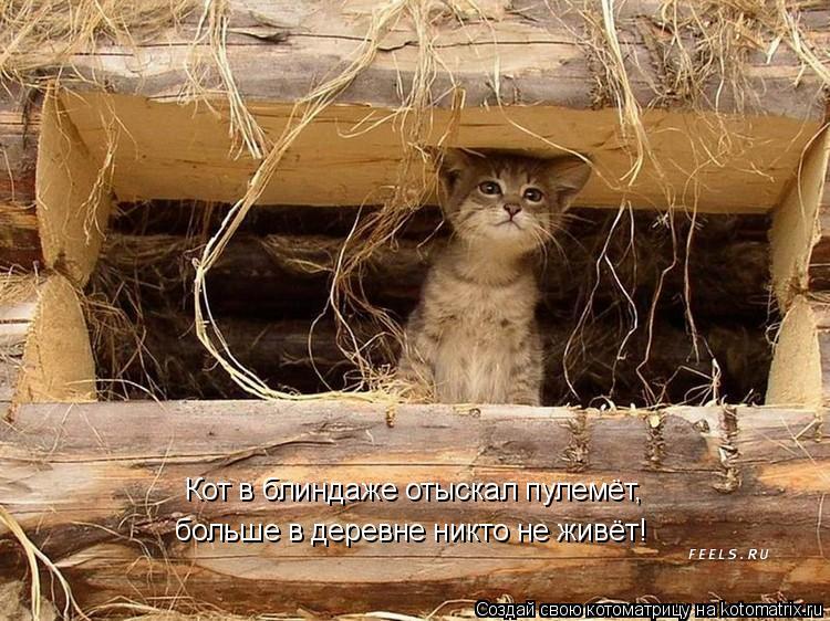 Котоматрица: Кот в блиндаже отыскал пулемёт, больше в деревне никто не живёт!