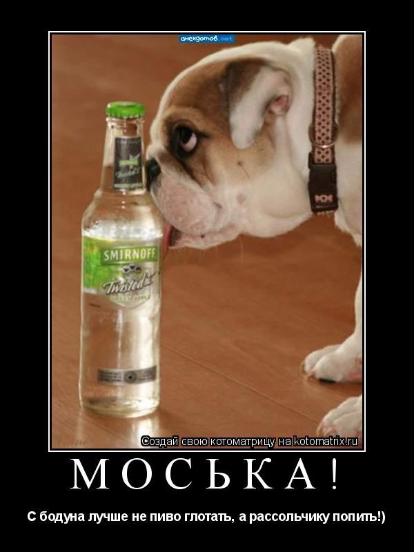 Котоматрица: Моська! С бодуна лучше не пиво глотать, а рассольчику попить!)