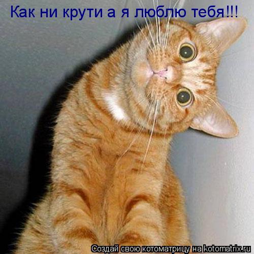 Котоматрица: Как ни крути а я люблю тебя!!!