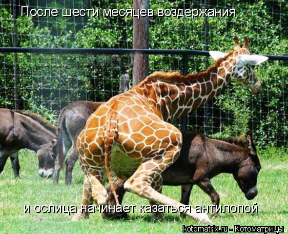 Котоматрица: После шести месяцев воздержания  и ослица начинает казаться антилопой