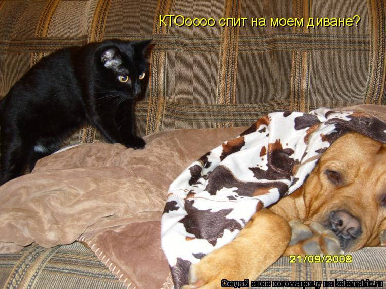 Котоматрица: КТОоооо спит на моем диване?