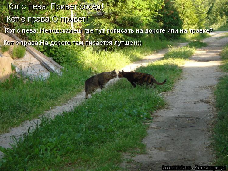 Котоматрица: Кот с лева: Привет сосед! Кот с права:О привет! Кот с лева: Неподскажеш где тут пописать на дороге или на травке? Кот с права:На дороге там писа