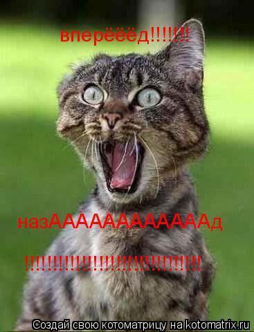 Котоматрица: вперёёёд!!!!!!! назААААААААААААд !!!!!!!!!!!!!!!!!!!!!!!!!!!!!!!