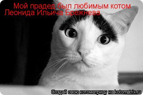 Котоматрица: Мой прадед был любимым котом  Леонида Ильича Брежнева