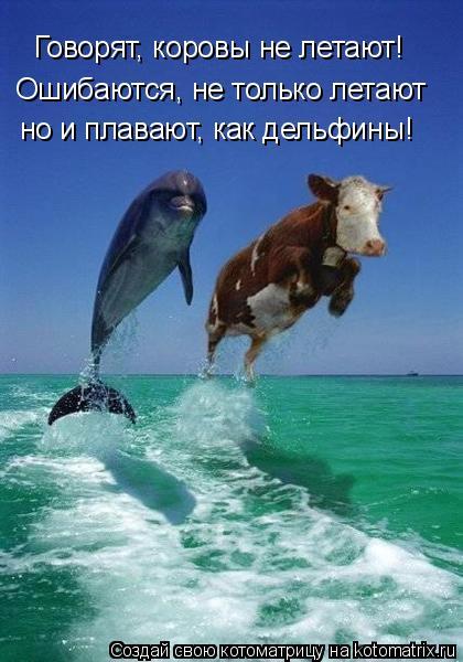 Котоматрица: Говорят, коровы не летают! Ошибаются, не только летают но и плавают, как дельфины!