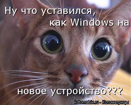 Котоматрица: Ну что уставился,   как Windows на новое устройство???
