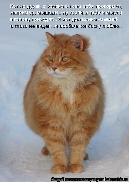 Котоматрица: Кот не дурак, в кризис он сам себя прокормит,  например, мышами..-ну хозяйка тебе и мысли  в голову приходят...Я кот домашний -мышей  в глаза не в