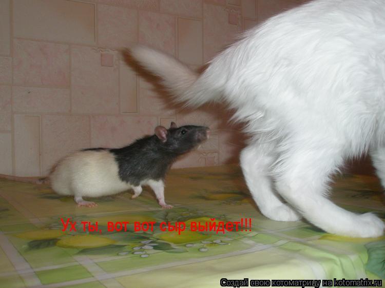 Котоматрица: Ух ты, вот вот сыр выйдет!!!