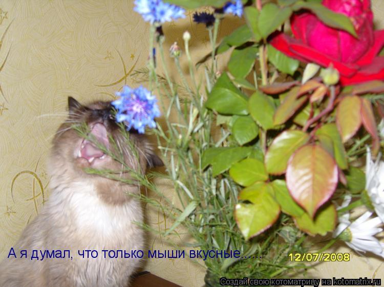 Котоматрица: А я думал, что только мыши вкусные......