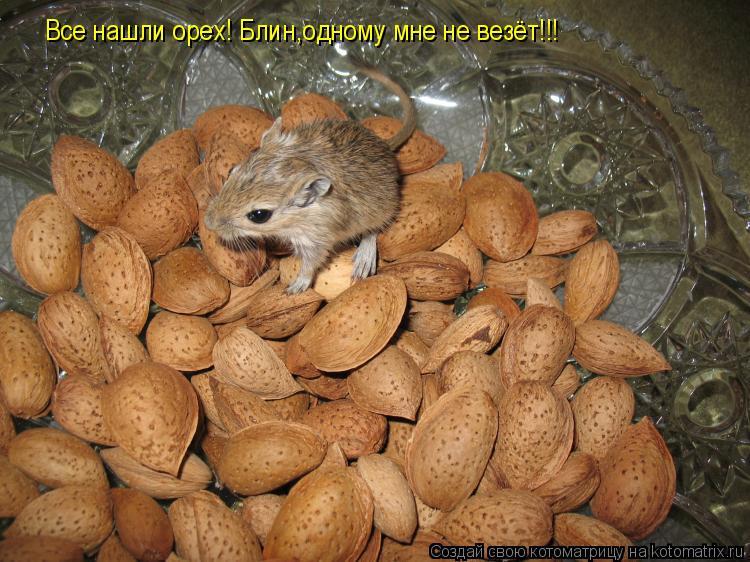 Котоматрица: Все нашли орех! Блин,одному мне не везёт!!!