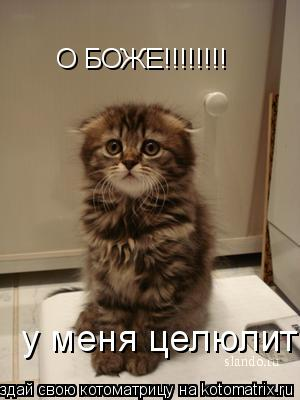 Котоматрица: О БОЖЕ!!!!!!!! у меня целюлит