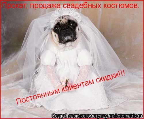Котоматрица: Прокат, продажа свадебных костюмов. Постоянным клиентам скидки!!!
