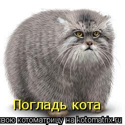 Котоматрица: Погладь кота