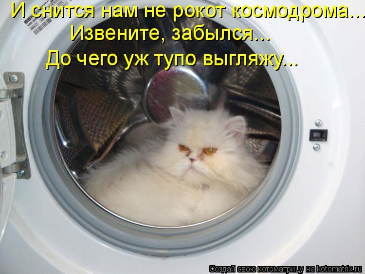 Котоматрица: И снится нам не рокот космодрома... Извените, забылся... До чего уж тупо выгляжу...