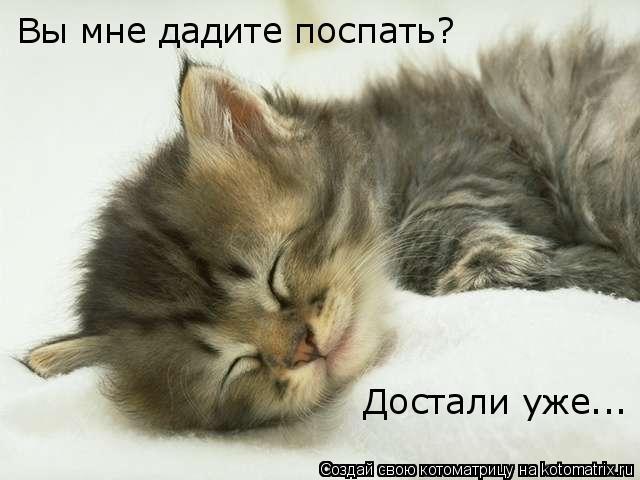 Котоматрица: Вы мне дадите поспать? Достали уже...