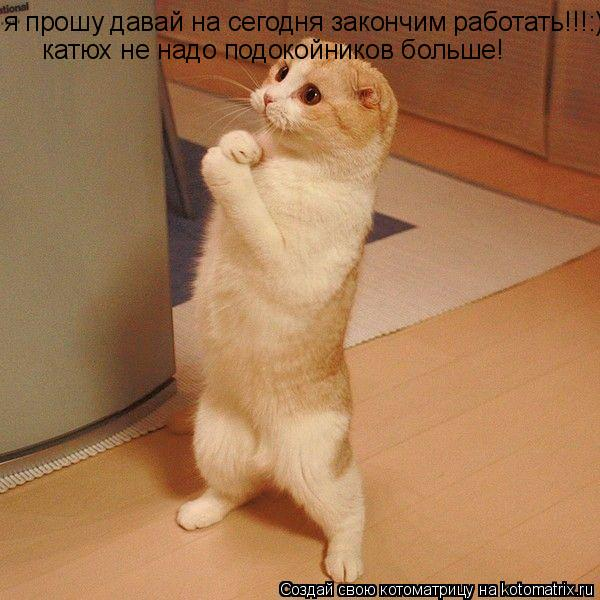 Котоматрица: я прошу давай на сегодня закончим работать!!!:) катюх не надо подокойников больше!