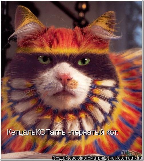 Котоматрица: КетцальКОТатль -пернатый кот.