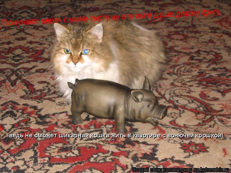 Котоматрица: Приучают меня к мини-пиггу,ну а я им в душе держу фигу,     ведь не сможет шикарная кошка жить в квартире с вонючей крошкой!   ведь не сможет шик