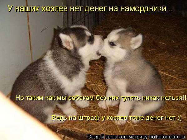 Котоматрица: У наших хозяев нет денег на намордники... Но таким как мы собакам без них гулять никак нельзя!!! Ведь на штраф у хозяев тоже денег нет :(