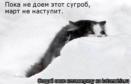 Котоматрица: Пока не доем этот сугроб, март не наступит.