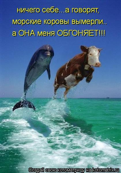 Котоматрица: ничего себе...а говорят, морские коровы вымерли.. а ОНА меня ОБГОНЯЕТ!!!