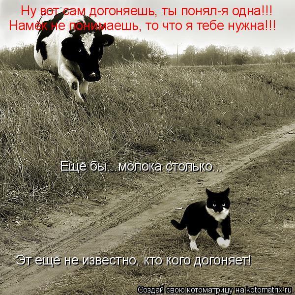 Котоматрица: Ну вот сам догоняешь, ты понял-я одна!!! Намёк не понимаешь, то что я тебе нужна!!! Ещё бы...молока столько... Эт ещё не известно, кто кого догоняе