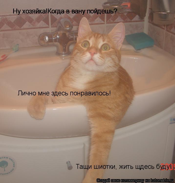 Котоматрица: Ну хозяйка!Когда в вану пойдешь? Ну хозяйка!Когда в вану пойдешь? Лично мне здесь понравилось! Тащи шиотки, жить щдесь буду!