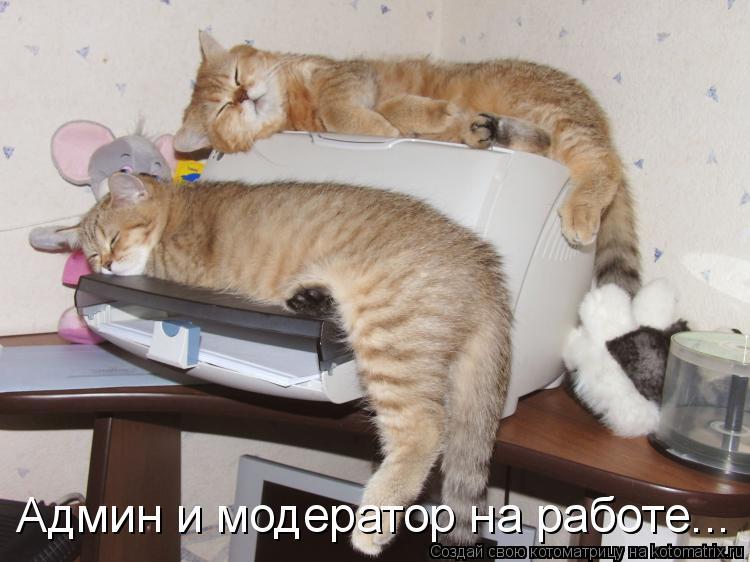 Котоматрица: Админ и модератор на работе...