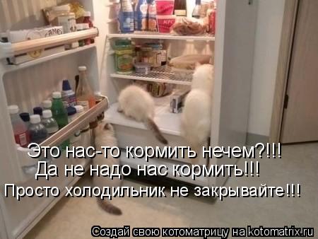 Котоматрица: Это нас-то кормить нечем?!!! Да не надо нас кормить!!! Просто холодильник не закрывайте!!!