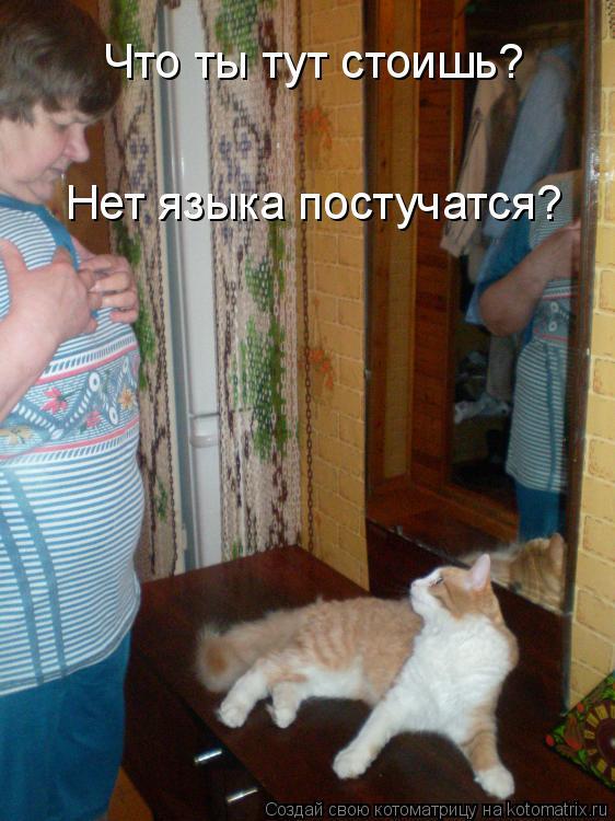 Котоматрица: Что ты тут стоишь?  Нет языка постучатся?