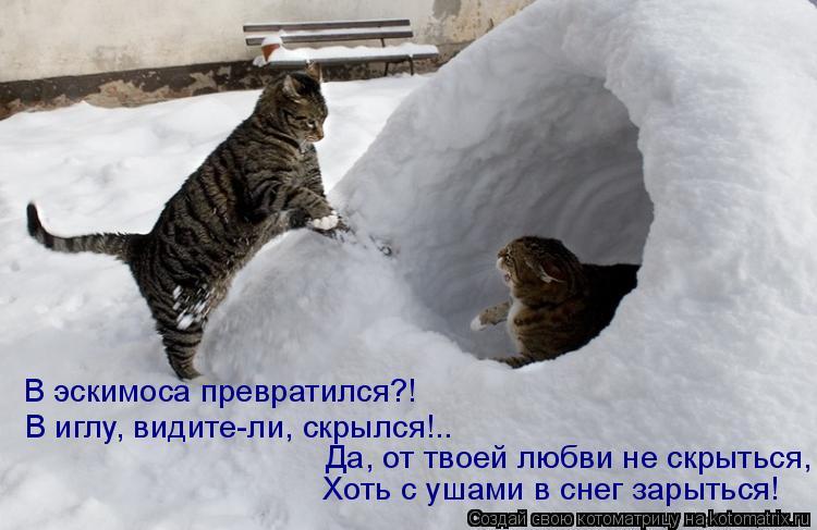 Котоматрица: В эскимоса превратился?! В иглу, видите-ли, скрылся!.. Хоть с ушами в снег зарыться! Да, от твоей любви не скрыться,