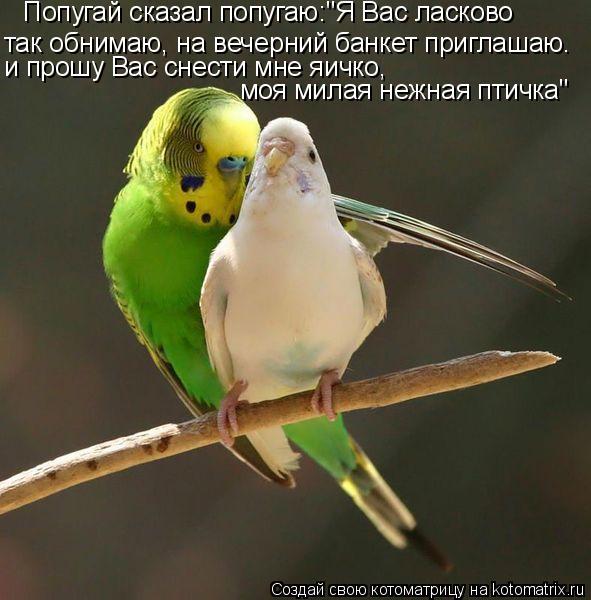 """Котоматрица: Попугай сказал попугаю:""""Я Вас ласково так обнимаю, на вечерний банкет приглашаю. и прошу Вас снести мне яичко, моя милая нежная птичка"""""""