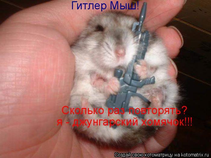 Котоматрица: Гитлер Мыш! Сколько раз повторять? я - джунгарский хомячок!!!