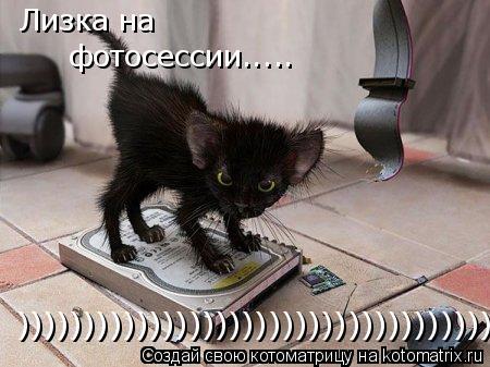 Котоматрица: Лизка на  фотосессии..... )))))))))))))))))))))))))))))))))))))))))))