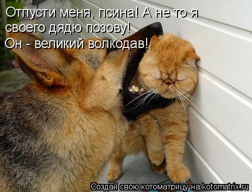 Котоматрица: Отпусти меня, псина! А не то я своего дядю позову! Он - великий волкодав!