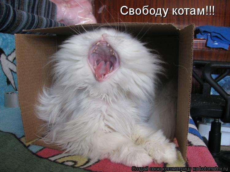 Котоматрица: Свободу котам!!!