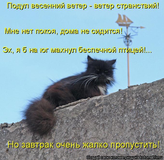 Котоматрица: Подул весенний ветер - ветер странствий!  Мне нет покоя, дома не сидится!  Эх, я б на юг махнул беспечной птицей!... Но завтрак очень жалко пропу