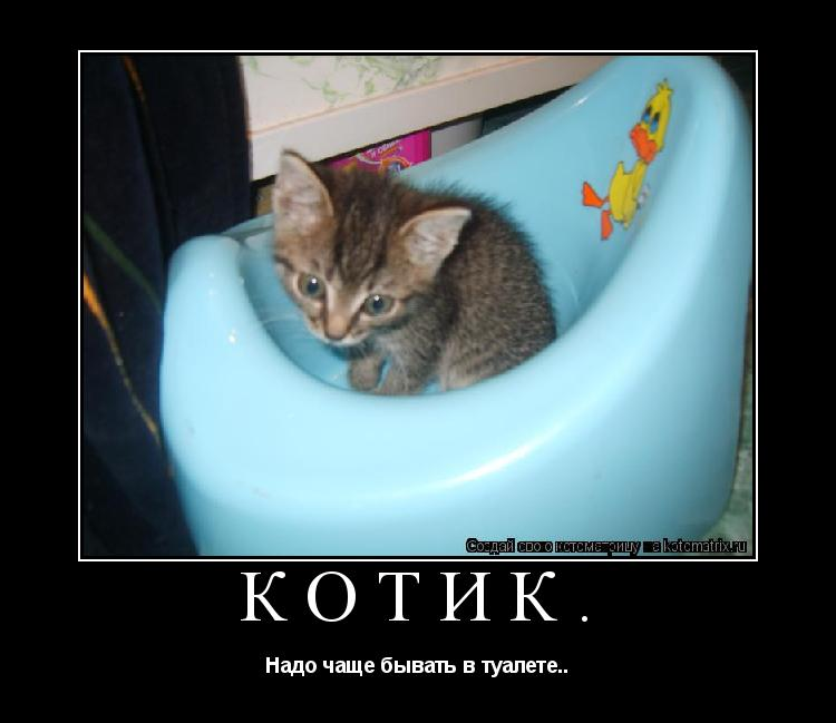 Котоматрица: Котик. Надо чаще бывать в туалете..