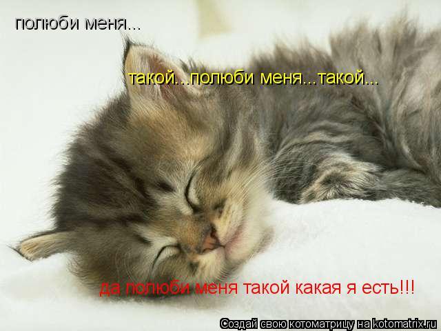 Котоматрица: полюби меня... такой...полюби меня...такой... да полюби меня такой какая я есть!!!