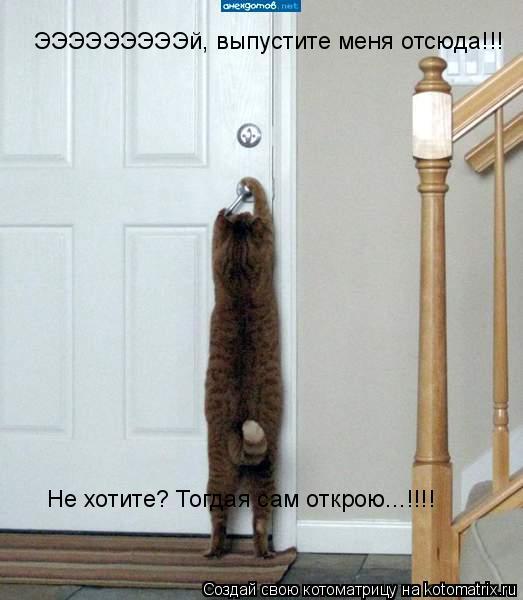 Котоматрица: ЭЭЭЭЭЭЭЭЭй, выпустите меня отсюда!!! Не хотите? Тогдая сам открою...!!!!